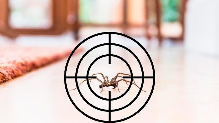 Вбити павука в будинку: прикмети, що буде при випадковому або навмисному  вбивстві   Прикмети