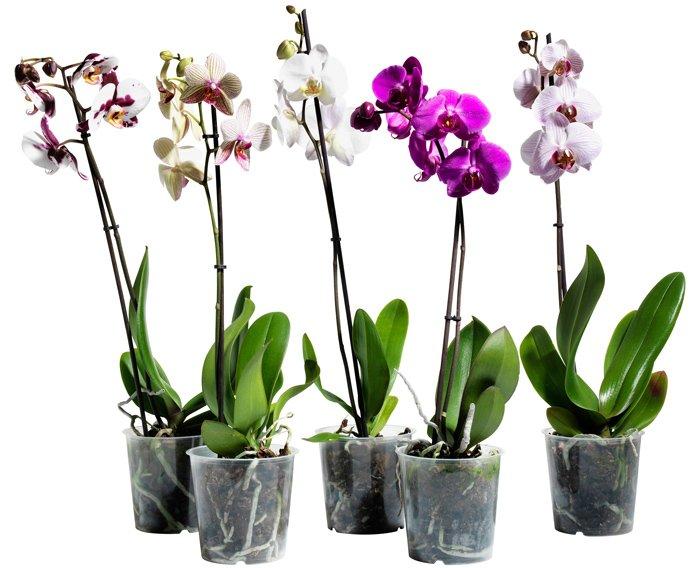 daruvati kv ti v gorschikah Чи можна дарувати квіти в горщиках на день народження — прикмети та їх тлумачення
