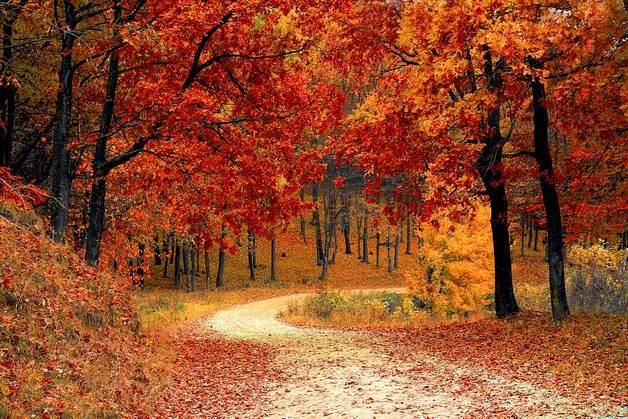 prikmeti zhovtnya Прикмети жовтня: народні передбачення про погоду по днях, повіря про весілля